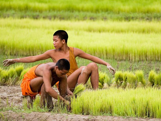 rice_farmers